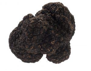 zwarte truffel vrij