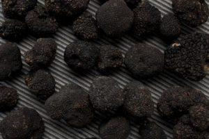 Truffel zwart op steen_532x355