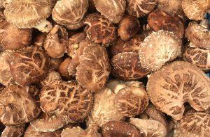 Shiitake in krat, houtgekweekt